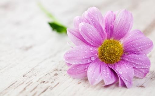 flower-wallpaper-1_.jpg